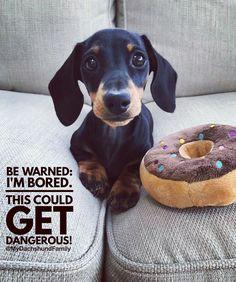 0f6dba1d0f74656ec5c9e0a6e7c232c4--dachshund-quotes-dachshund-humor