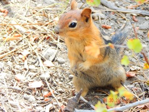 Chipmunks everywhere!